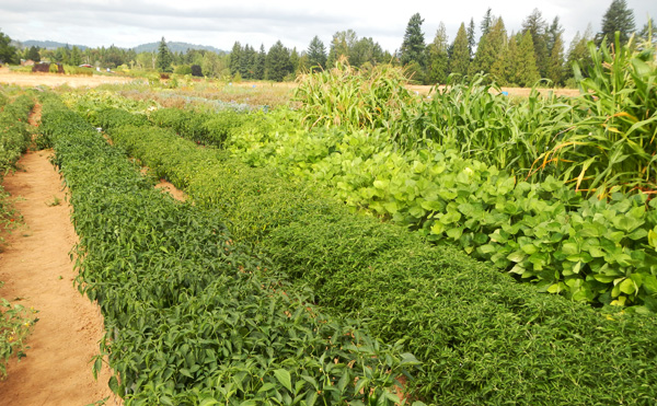 various crop rows on one of the plots at Headwaters Farm