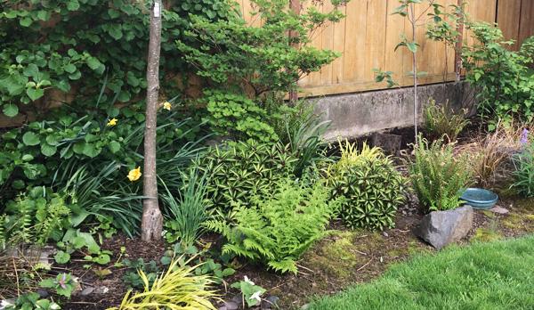 a naturescaped yard in Portland