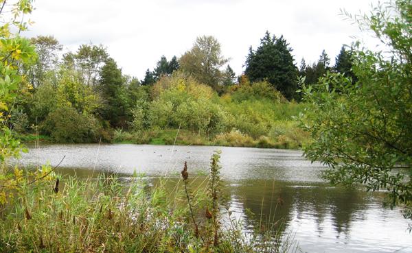 Brookside Wetlands