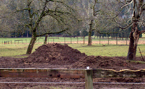 a messy pile of manure in a field
