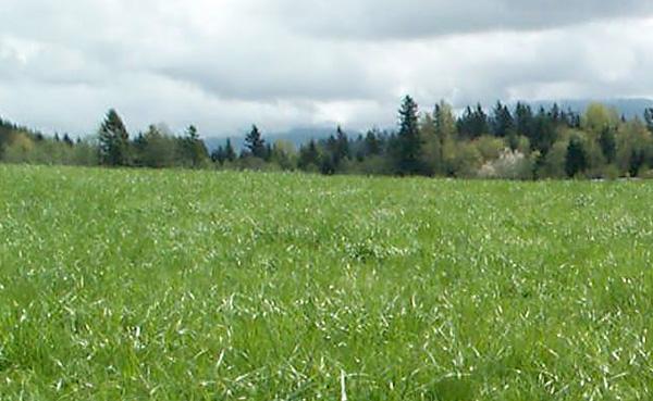 healthy pasture