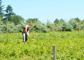 farming at headwaters farm