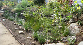 a residential rain garden