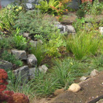 detail of a rain garden