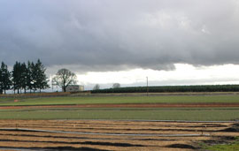 Farmland on a cloudy day