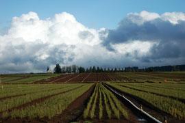 cloudy skies and farmland