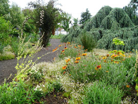 naturescaped yard at EMSWCD