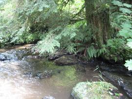 healthy riparian area