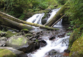 healthy stream with waterfall - gordon creek