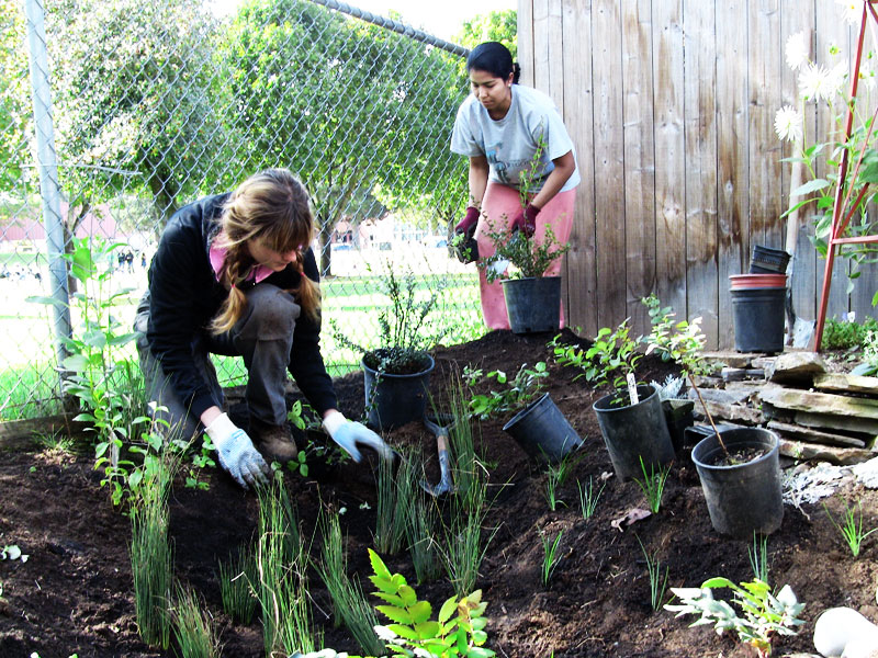 Two young women planting a new rain garden