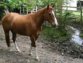 horse near a stream