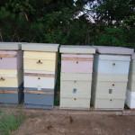 bee hive stacks