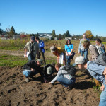 examining pollinator plant germination