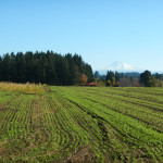 cover crops at Headwaters