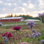 Headwaters Farm - field and flowers