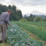 Headwaters Farm - Rick inspecting crops