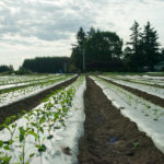 Rows of vegetable starts at Headwaters Farm