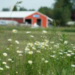 Headwaters Farm - flowers