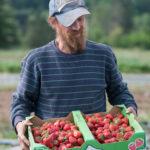 Farmer holding strawberries
