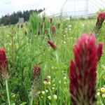 pollinator strip at Headwaters Farm