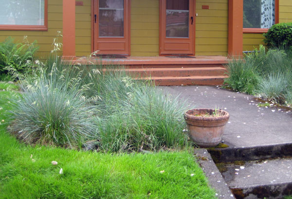 in the picture, one of two small rain gardens frame the front step entrance to residences