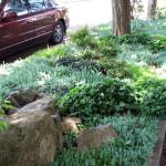 naturescaped parking strip