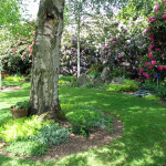lawn reduction through naturescaping