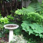 naturescaped yard and birdbath