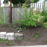 developing naturescaped yard