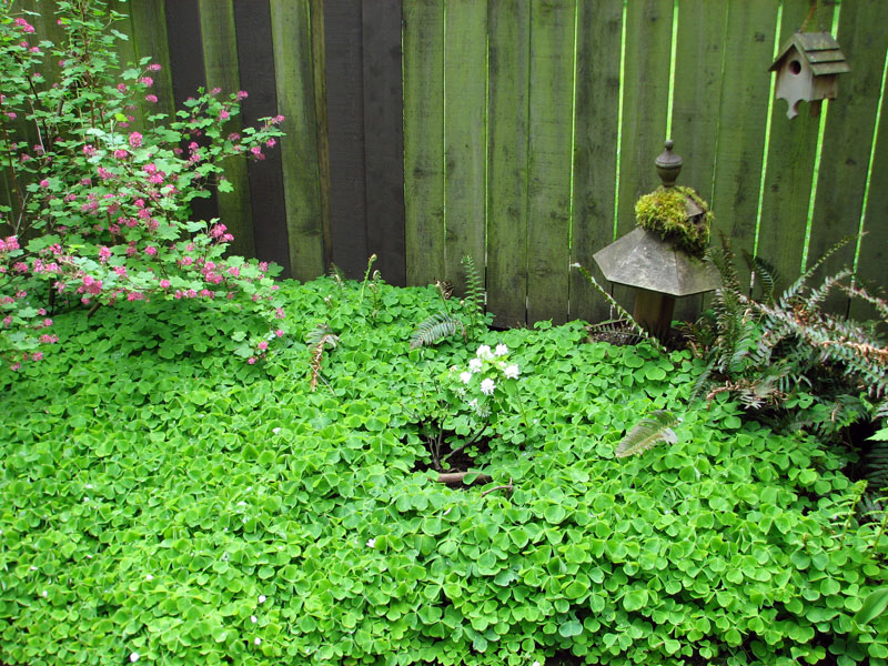 naturescaped yard