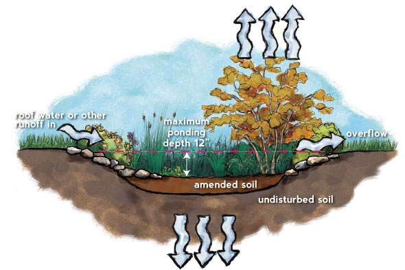 illustration of a rain garden