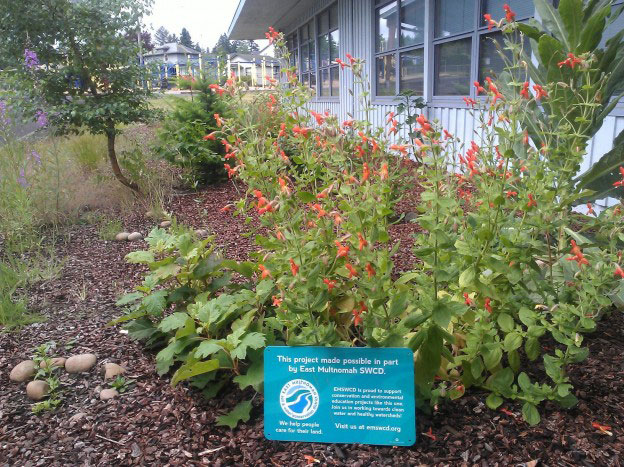 another view of the butterfly garden