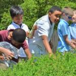 children having fun at an outdoor farm