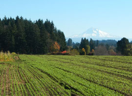 Headwaters Farm with Mt Hood in the background