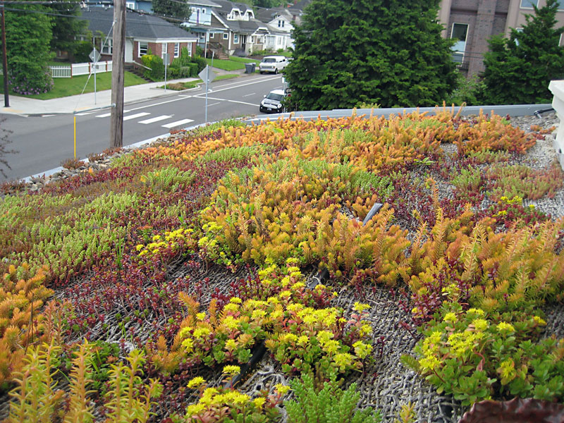 ecoroof plants