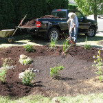 planting in the new rain garden