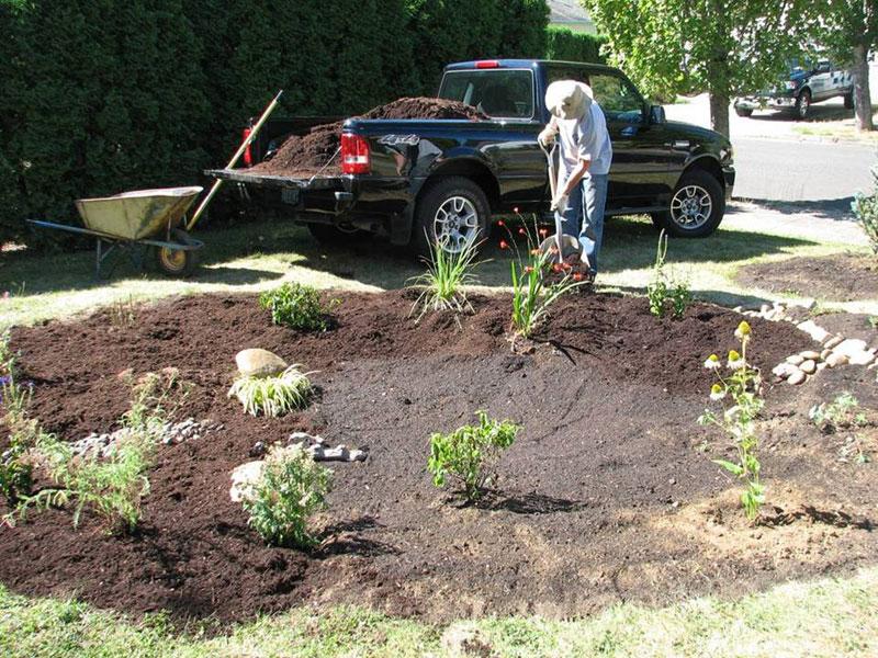 planting in the new rain garden
