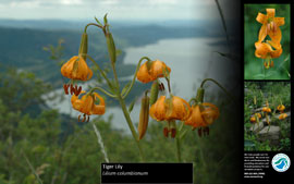 screenshot of native plant screensaver