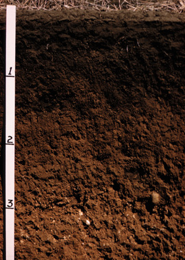 profile of soil