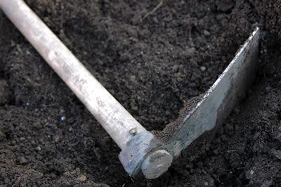 pick on bare soil