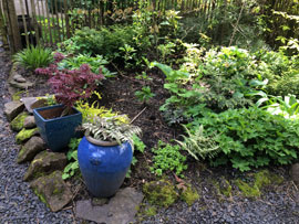 naturescaped yard in 2014 yard tour