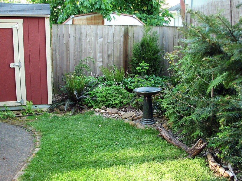 naturescaped yard with lawn