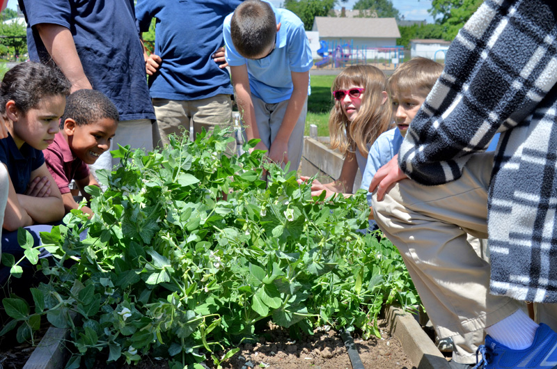 Cully Young Farmers Project