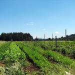 Incubator farmer plots at Headwaters
