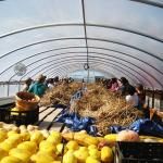 NIFTI Tour participants gather inside the propagation greenhouse