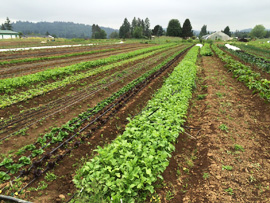 at Headwaters Farm in Orient, Oregon