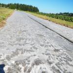 solarization for a pollinator meadow