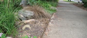 Learn how to build a rain garden!
