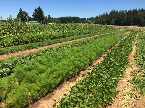Headwaters Farm - crops