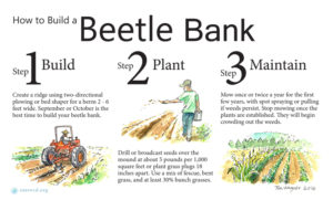 how to build a beetle bank